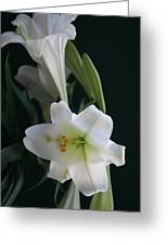 Lustrous Lilies Greeting Card