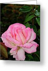 Lustrous Pink Rose Greeting Card