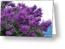 Luxurious Lilacs Greeting Card