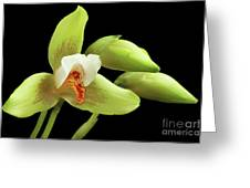 Lycaste Deppei Orchid Greeting Card