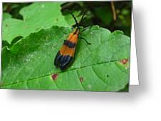 Lycomorpha Moth Greeting Card
