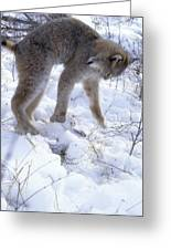 Lynx Captures Hare Greeting Card