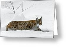 Lynx Hunting In The Snow Greeting Card