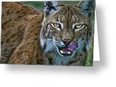 Lynx Licks Lips Greeting Card