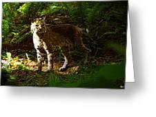 Lynx Rufus Greeting Card