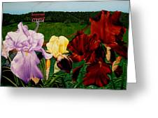 M S  O S Irises 2  Greeting Card