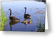 Ma N Pa Geese And All The Little Ones Greeting Card