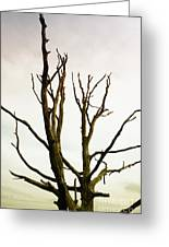 Macabre Leafless Tree Greeting Card