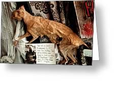 Macabre Mummified Cat - Halloween Greeting Card