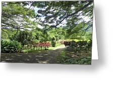 Macadamia Road Greeting Card