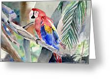 Macaw Greeting Card