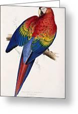 Macaw By_edward_lear Greeting Card