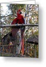 Macaw Guatemala Greeting Card