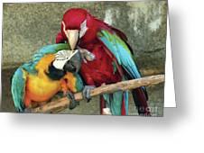 Macaw Love Greeting Card