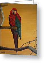 Macaw Of The Canary Island Greeting Card