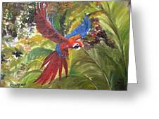 Macaw Parrot 3 Greeting Card