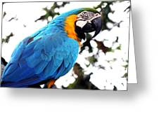 Macaw Parrot Greeting Card