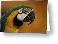Macaw Portrait Greeting Card