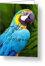 Macaw Quote Greeting Card