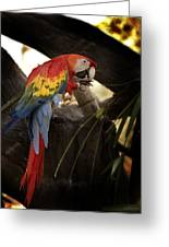Macaw Tampa Florida Greeting Card