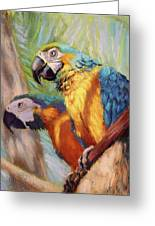 Macaws In The Sunshine Greeting Card