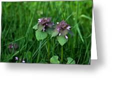 Macro Blooming Clover Greeting Card