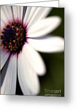 Macro Daisy One Greeting Card