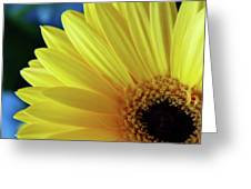 Macro Daisy Greeting Card