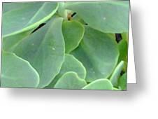 Macro Green Greeting Card