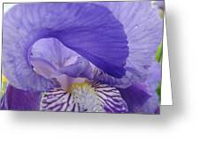 Macro Irises Close Up Purple Iris Flowers Giclee Art Prints Baslee Troutman Greeting Card