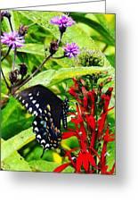 Macro Nature Greeting Card