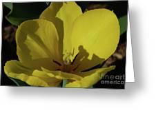 Macro Of A Flowering Yellow Tulip Up Close Greeting Card