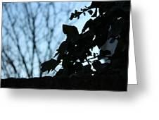 Macro On Leaves Greeting Card