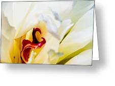 Macro Peonie Greeting Card