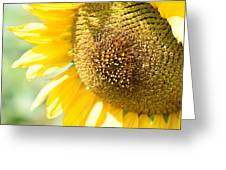 Macro Photography Of Sunflower Greeting Card