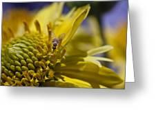Macro Pollinating Fly Greeting Card