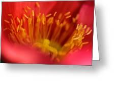 Macro Poppy 4 Greeting Card