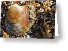 Macro Shell Greeting Card