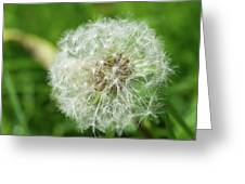 macro shot of a beautiful Dandelion. Greeting Card