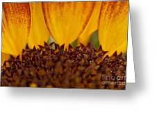 Macro Sunflower Greeting Card