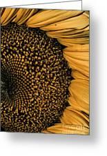 Macro Sunflower Greeting Card