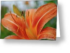 Macros Day Lily Greeting Card