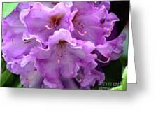 Macros Wild Azalea Greeting Card