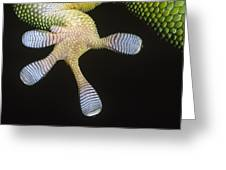 Madagascar Day Gecko Phelsuma Greeting Card