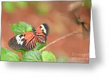Madiera Butterflies Greeting Card