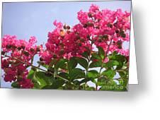 Magenta Flames Greeting Card