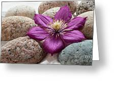 Clematis Flower On Meditation Stones Greeting Card