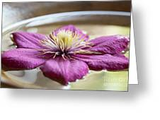Peaceful Clematis Greeting Card