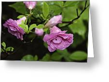 Magenta In The Wild Greeting Card