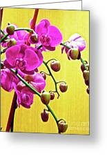 Magenta Orchid 3 Greeting Card
